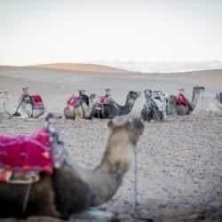 sachara, dykuma, marokas, agadiras