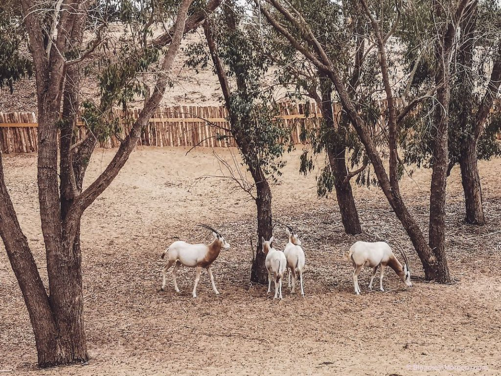 Agadir national park animals