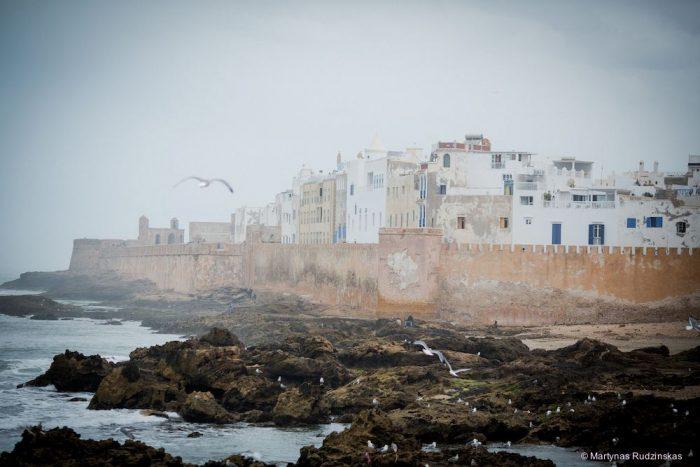 essaouira, morocco, town, wall, birds