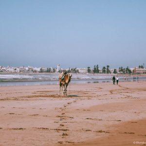 esssaouira port morocco
