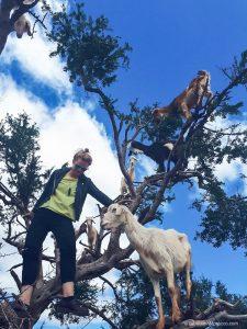 morocco, goats, tree, climbing, argan tree, girl
