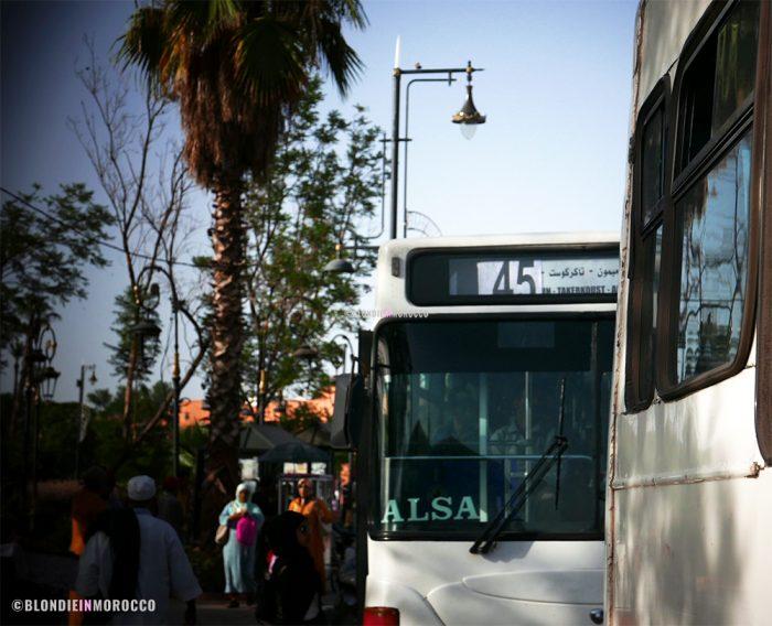 bus palm trees morocco