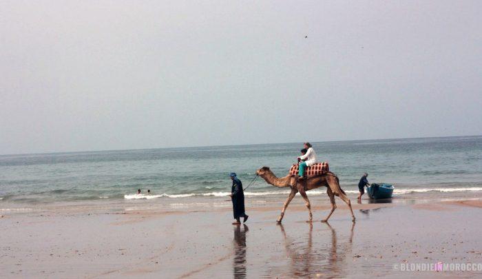 beach, camel, ride, ocean, morocco, camel ride