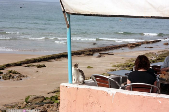 cat, terrace, cafe, ocean, beach