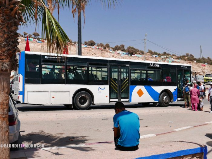 taghazout, bus, local bus, palm trees