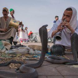 marrakech morocco snake