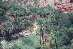 paradise valley morocco river palm trees