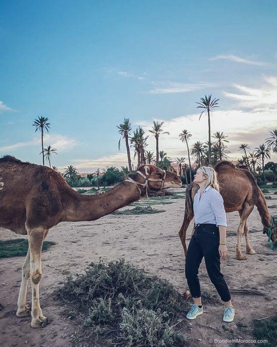 morocco, girl, palmtree, camel, camels, blondie