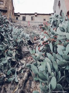 cactus, cacti, cactus fruit, morocco