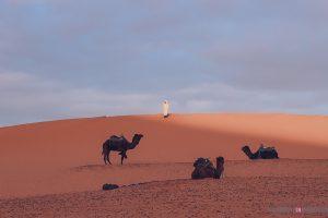 morocco desert camp camels berber