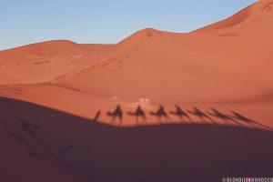 desert morocco camel dunes merzouga shadow