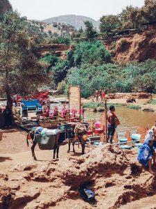 ouzoud, waterfall, morocco, mountain, donkey