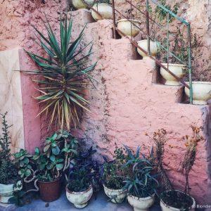 berber house, morocco, plants