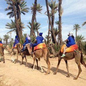 marrakech camel ride palm grove