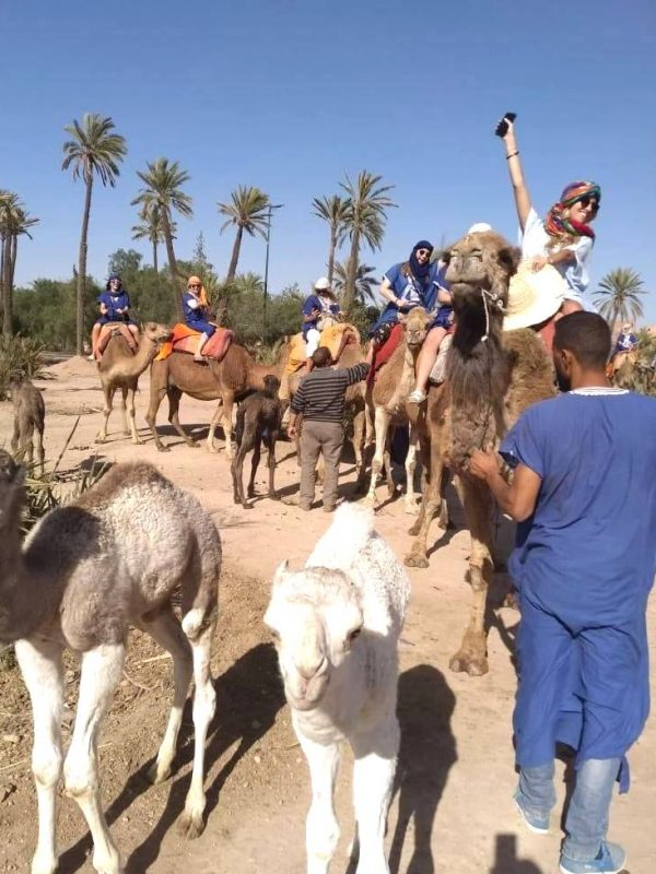 marrakech camel ride palm grove