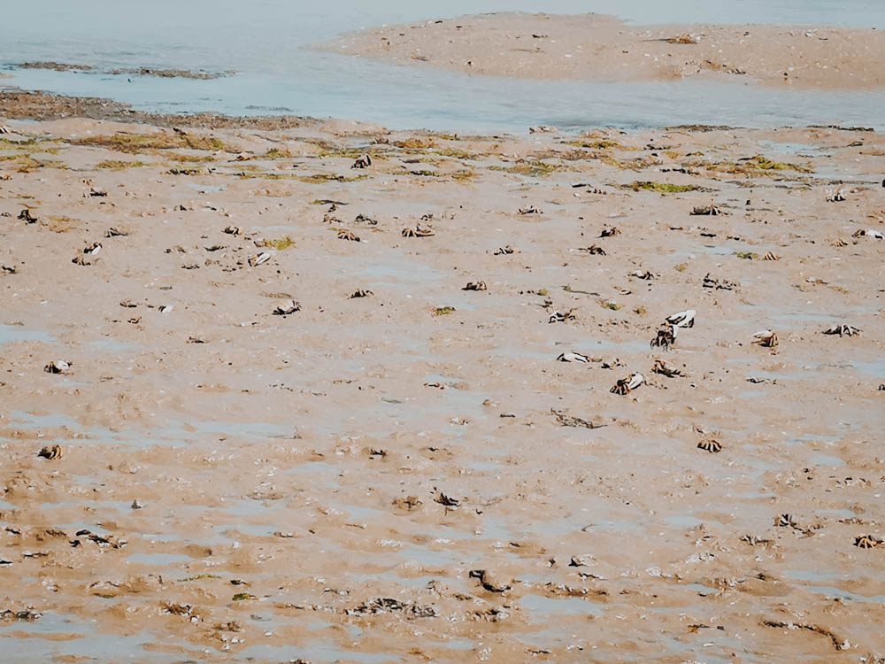 beach morocco sand water birdwatching crabs