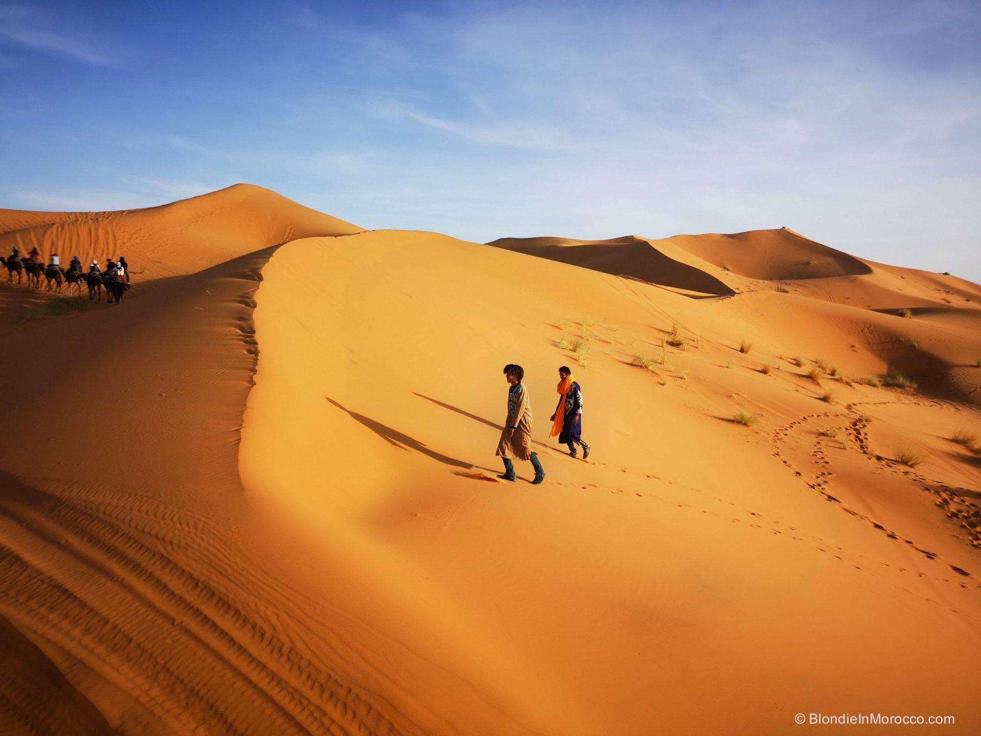 Sahara-desert-morocco-Merzouga-camel8