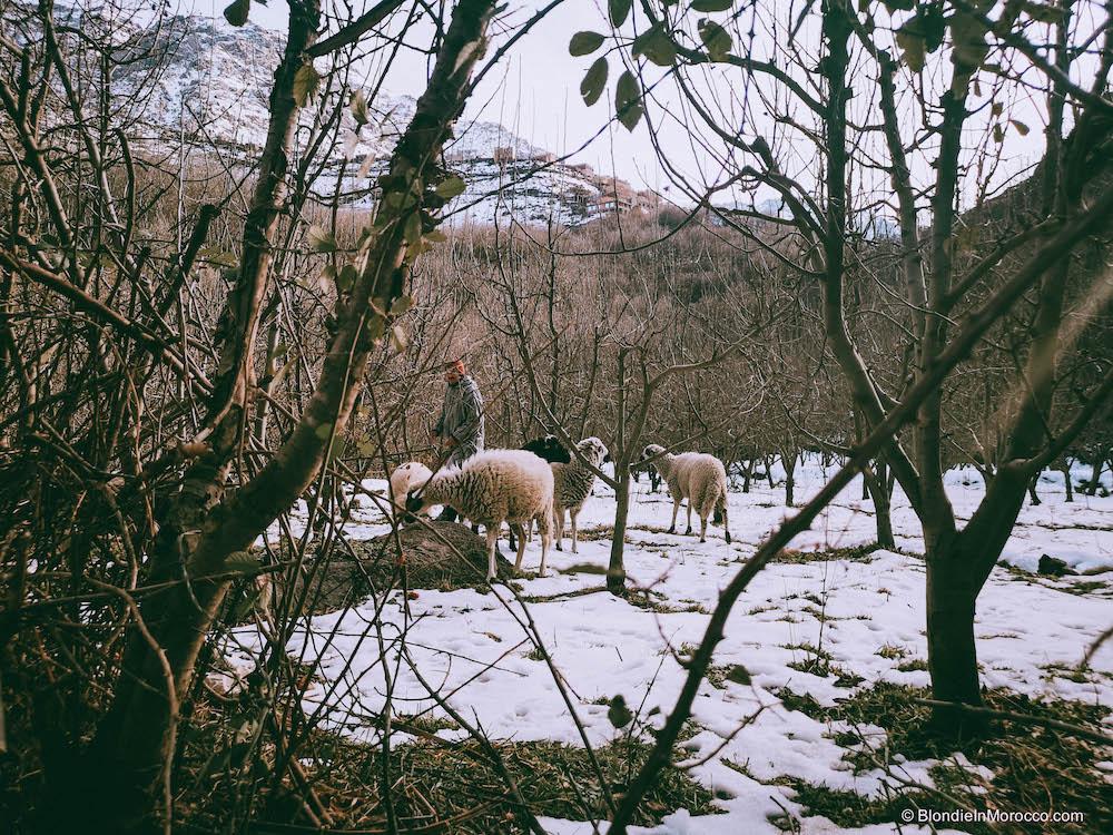 Imlil Morocco mountains High Atlas snow hiking sheep