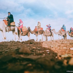 camels morocco