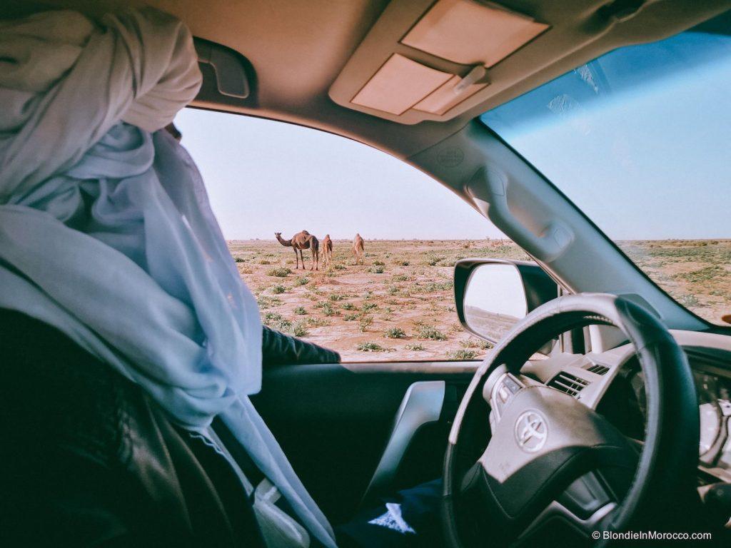 erg chigaga desert morocco dunes sahara camel driver camel