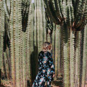 cactus cacti morocco marrakech nursery