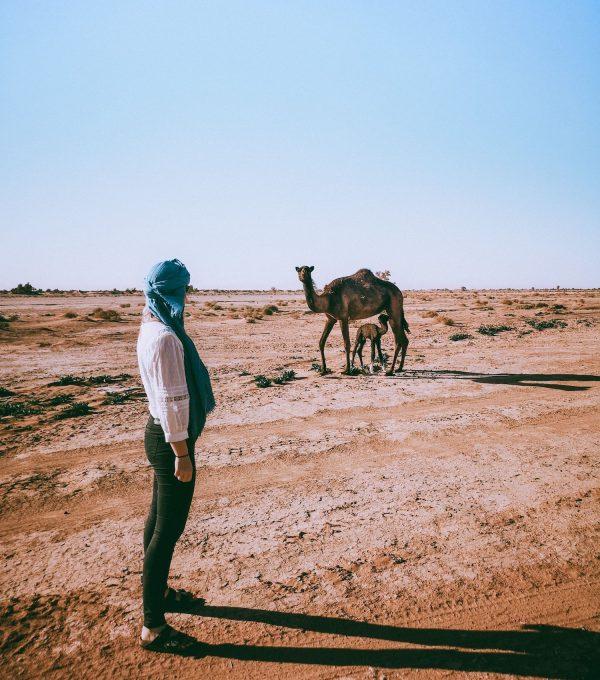 erg chigaga desert morocco dunes sahara camel
